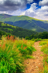 mountain path in the tall grass