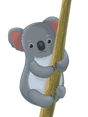 koala cartoon character