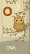 Letter O, Owl, animal ABC