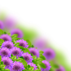 Flowers on the blurred background