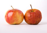 apples, young and old as a metaphor for aging.  white background poster