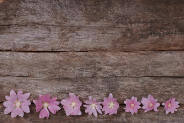 Flower festive frame of pink mallow flowers on a wooden table