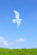 草原と鳥の雲