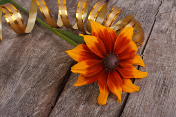 rudbeckia flower with gold ribbon on an old wooden table
