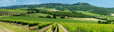 Panorama of wine fields in Italy