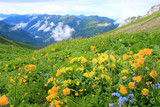 Mountain flowers and peaks