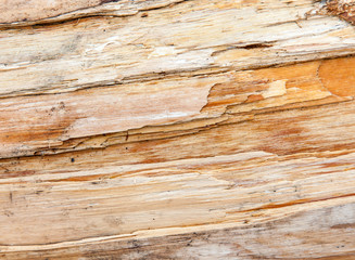 Rough piece of wood texture