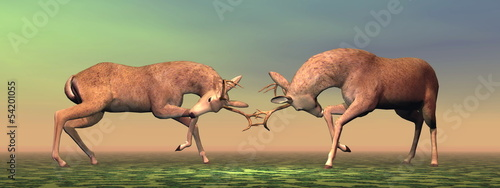 Bucks fighting - 3D render