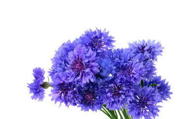 Blue cornflower bouquet