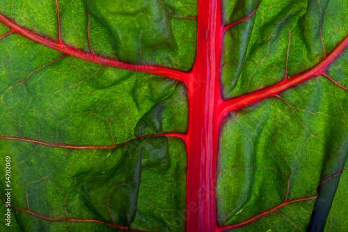 Closeup eines Mangold-Blattes