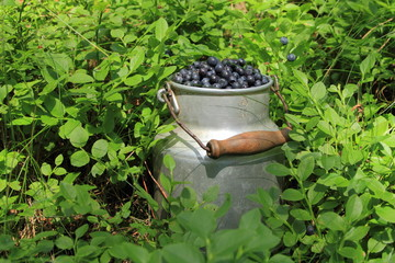 Blueberries in old jug