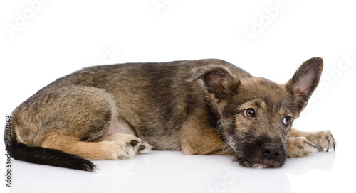 sad mixed breed dog. isolated on white background