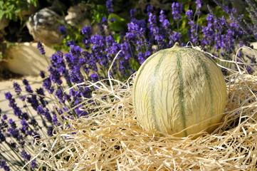 Melon et lavande