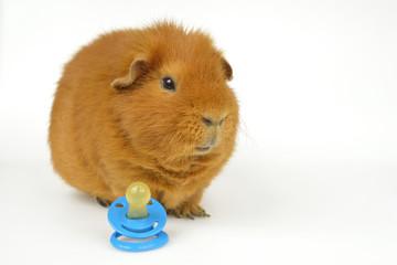 Nuckel-Schweinchen