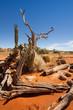 dead tree in Kalahari - 54208096
