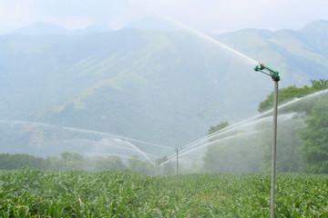 impianto di irrigazione su campo di mais