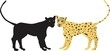 Постер, плакат: Leopard and Pantera