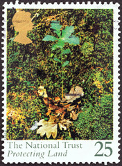 Oak seedling (United Kingdom 1995)