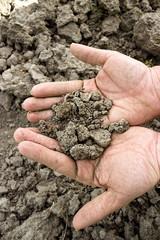 cracked dry soil