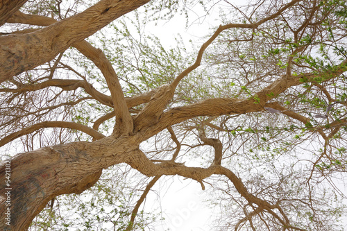 Beautiful branches extending outward, tree of life
