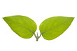 Green Bipartite Leaf