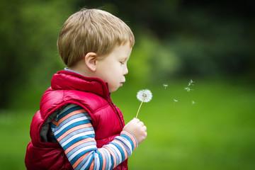 Little boy with dandelion