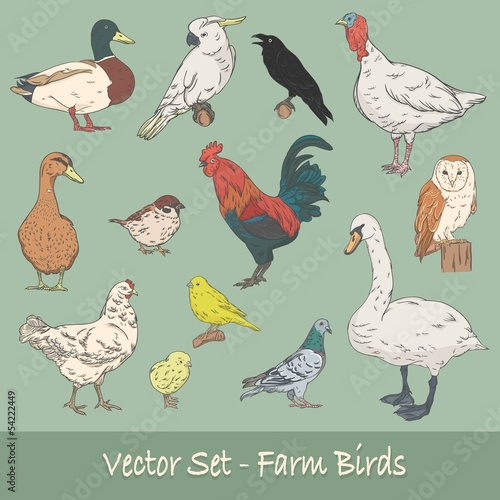 Fotobehang Farm Birds Vector Set