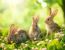 Króliki. Art Design cute little wielkanocne króliczki na łące.