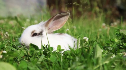 White bunny sitting in a grass, closeup