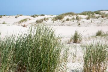 Dünengrass vor den Dünen der Insel Norderney
