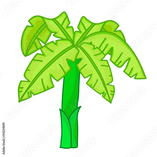 Banana tree isolated illustration