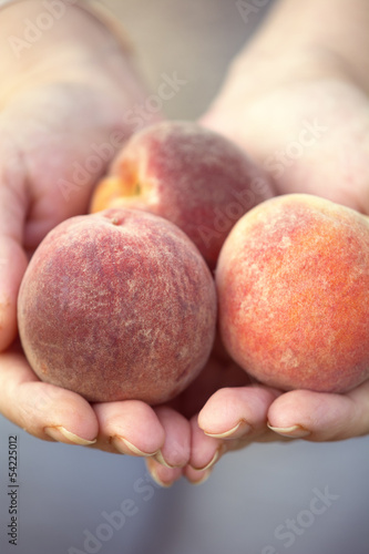 Female hands holding peaches.