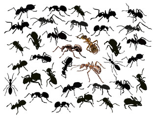 large set of isolated ants