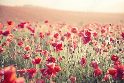 Stunning poppy field landscape under Summer sunset sky with cros