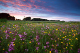 pink wildflowers at sunset