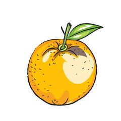 Bleistiftzeichnung: Orange