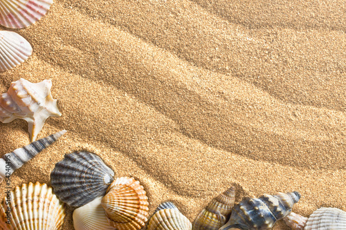 sea shells on sand