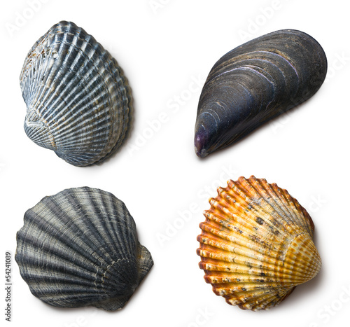 various sea shells on white background