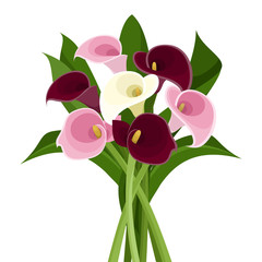 Bouquet of colored calla lilies. Vector illustration.