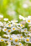 Fototapety flowers