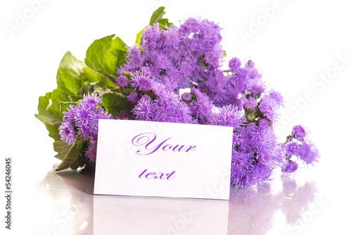Foto op Canvas Lilac Ageratum