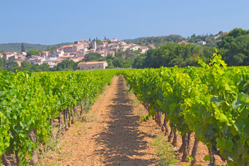 Vineyard in Provence (France)