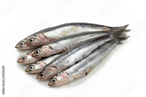 Anchoas frescas o crudas