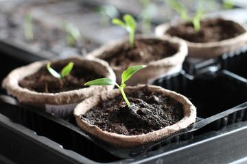 Garden grow. Eco