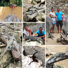 Collage of photos in Iguanas zoo