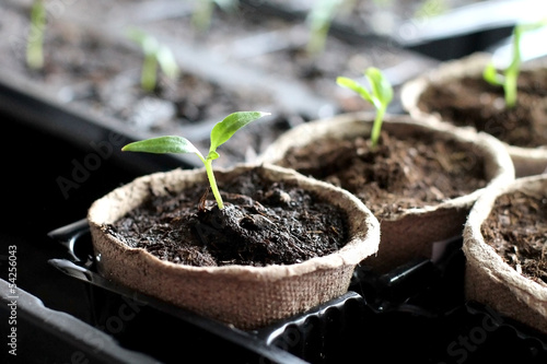 Gardening. Seedlings