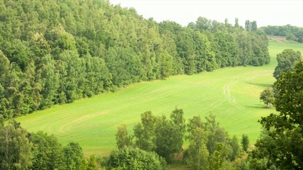 panorama of green forest and meadow