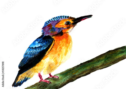 kingfisher watercolor sketch