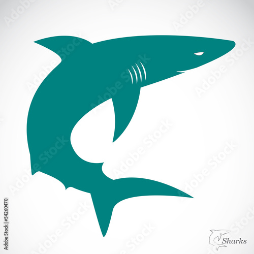 Vector image of an shark