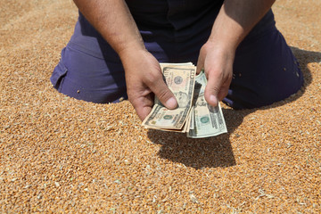 Farmer hands holding dollar banknote at wheat crop